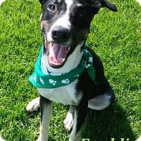 Adopt A Pet :: Freddie - El Cajon, CA