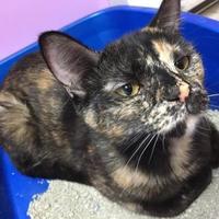 Adopt A Pet :: Galaxy - Orleans, VT
