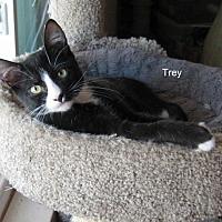 Adopt A Pet :: Trey - Parlier, CA