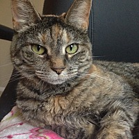 Adopt A Pet :: Ginger (Courtesy Post) - Encinitas, CA