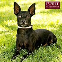 Adopt A Pet :: Marley - Marina del Rey, CA