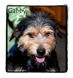 Terrier (Unknown Type, Medium) Mix Dog for adoption in Warren, Pennsylvania - Gabby