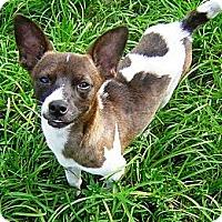 Adopt A Pet :: OMAR - Hollywood, FL