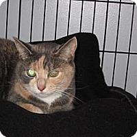 Adopt A Pet :: Wendy - Salem, OR