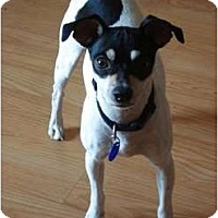 Adopt A Pet :: Jozi - Oklahoma City, OK