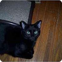 Adopt A Pet :: Gavin/Garrett - Vails Gate, NY