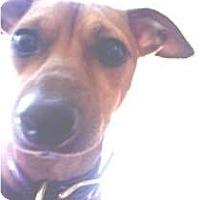 Adopt A Pet :: Oliver - Croton, NY