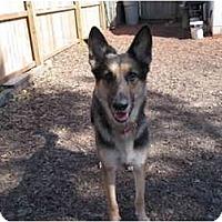 Adopt A Pet :: Einstein - Green Cove Springs, FL