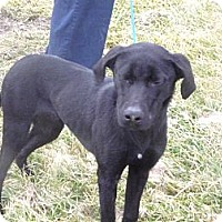 Adopt A Pet :: # 531-12 @ Animal Shelter - Zanesville, OH