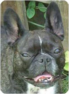 French Bulldog Dog for adoption in Beachwood, Ohio - Wednesday