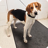 Adopt A Pet :: George - Lancaster, VA