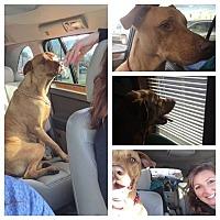 Adopt A Pet :: Jake - Winchester, VA