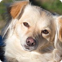 Adopt A Pet :: Paulina - Patterson, CA