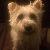 Adopt A Pet :: Sophia - Oak Ridge, NJ