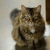 Adopt A Pet :: Shannon  150501 - Atlanta, GA