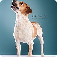 Adopt A Pet :: Gunther - Knoxville, TN