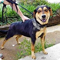 Adopt A Pet :: Lynx-041702k - Tupelo, MS
