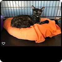 Adopt A Pet :: Chaquita - Fallbrook, CA
