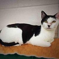 Adopt A Pet :: *TRIXIE - Hanford, CA