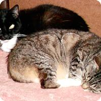 Adopt A Pet :: Angela and Bella - Novato, CA