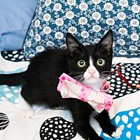 Adopt A Pet :: Juniper - Los Angeles, CA