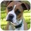 Photo 1 - Boxer/American Bulldog Mix Dog for adoption in Mocksville, North Carolina - Providence