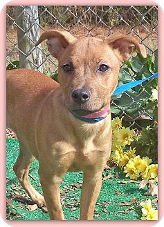 Labrador Retriever Mix Puppy for adoption in Marietta, Georgia - PENNY