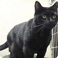 Adopt A Pet :: Elvis - St. Petersburg, FL
