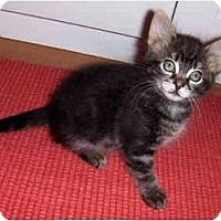 Adopt A Pet :: Celeste - Davis, CA