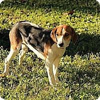 Adopt A Pet :: Grazie ($200 adoption fee) - Staunton, VA