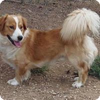 Adopt A Pet :: Bobby - Post, TX