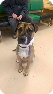 Hound (Unknown Type) Mix Dog for adoption in Walden, New York - Bingo