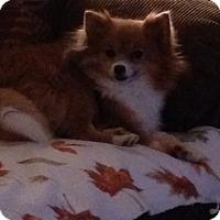 Adopt A Pet :: Bebe(adopted) - Butler, OH