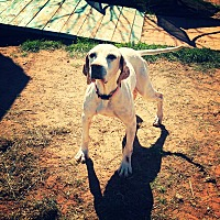 Adopt A Pet :: Penny - Odessa, TX