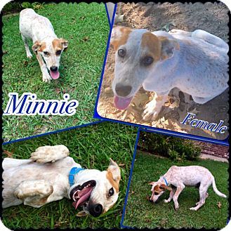 Hound (Unknown Type) Mix Puppy for adoption in East Hartford, Connecticut - Minnie in CT
