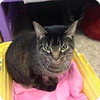Adopt A Pet :: Dakota - Byron Center, MI