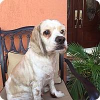 Adopt A Pet :: Charlie - Cape Coral, FL