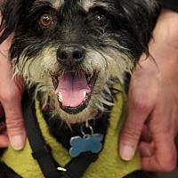 Adopt A Pet :: Stevie - Portland, OR