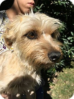 Terrier (Unknown Type, Small) Mix Dog for adoption in Beaumont, Texas - Priscilla