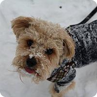 Adopt A Pet :: Dexter - Doylestown, PA