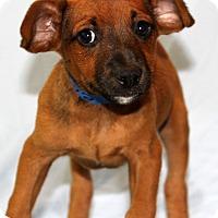 Adopt A Pet :: Blaine - Waldorf, MD