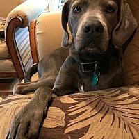 Adopt A Pet :: Addison - Yorktown, VA