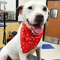 Adopt A Pet :: Cam **FOSTER NEEDED** - Christiana, TN