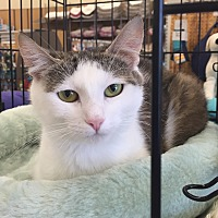 Adopt A Pet :: Star - Richmond, VA