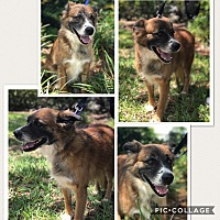 Adopt A Pet :: Valentine - Homestead, FL