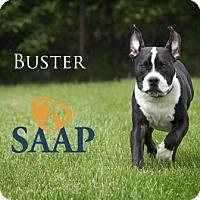 Adopt A Pet :: Buster - Newport, KY