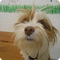 Adopt A Pet :: Baxter - Lockhart, TX