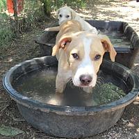 Adopt A Pet :: Mahoney - Godley, TX