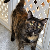 Adopt A Pet :: Smore - Michigan City, IN