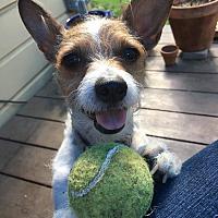 Adopt A Pet :: Preston - Studio City, CA